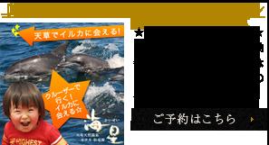 【感動と癒しの旅】イルカウオッチング体験プラン
