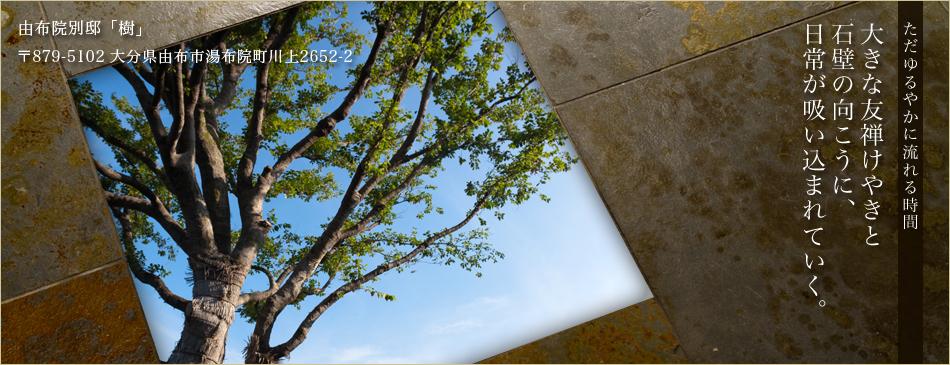 大きな友禅けやきと石壁の向こうに、日常が吸い込まれていく。ただゆるやかに流れる時間